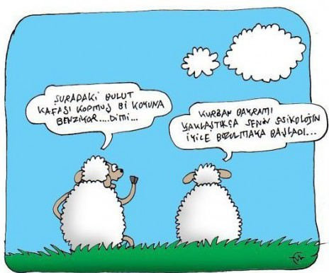 Kurban bayramı karikatürleri 3
