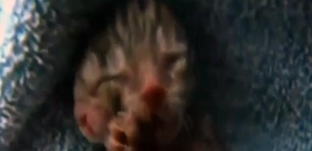 İki yüzlü kedi şok etti !