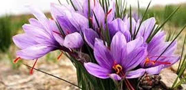 tumor tedavisinde umut veren bitki13874563330 h1107539 - T�m�r tedavisinde umut veren bitki